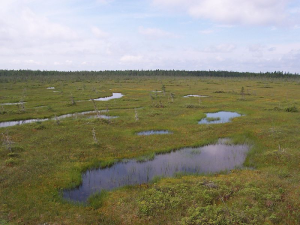 Peat bog - Credit to Boréal