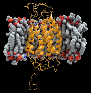 Computer-generated image of CCR5 receptor in cell membrane. Credit to Thomas Splettstoesser