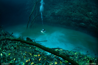 cenote6