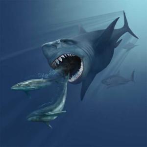 Artist Karen Carr's representation of the megalodon (source: http://www.karencarr.com/tmpl1.php?CID=196)