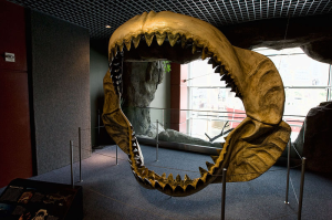Jaw reconstruction of megalodon - Photo by Serge Illayronov (http://www.naviquan.com)